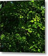 Fresh Linden Tree Foliage - Featured 2 Metal Print
