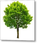 Fresh Lonely Tree Metal Print