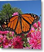 Fresh Monarch Butterfly Metal Print