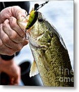 Fresh On The Hook Metal Print
