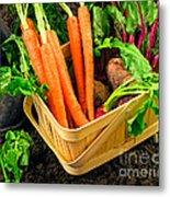 Fresh Picked Healthy Garden Vegetables Metal Print