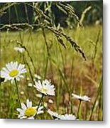 Fresh Rain Fresh Flowers Metal Print