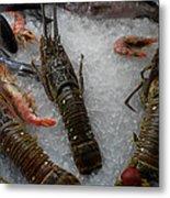Fresh Santorini Lobsters Metal Print