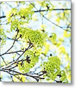 Fresh Spring Green Buds Metal Print