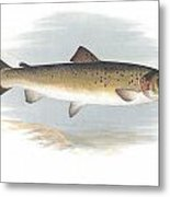Fresh Water Fish Metal Print