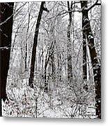 Freshly Fallen Snow Metal Print