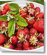 Freshly Picked Strawberries Metal Print