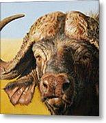 African Buffalo Metal Print