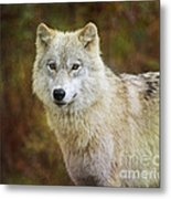 Friendly Beauty.. Metal Print