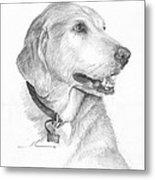 Friendly Dog Pencil Portrait  Metal Print