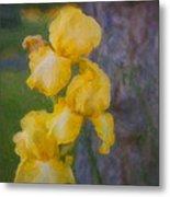 Friendly Yellow Irises Metal Print