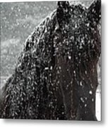 Friesian Snow Metal Print by Fran J Scott