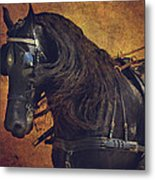 Friesian Under Harness Metal Print by Lyndsey Warren