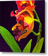 Frilly  Red And Yellow Orchids Metal Print