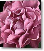 Frilly Rose Metal Print