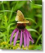 Fritilarie Butturfly On Purple Cone Flower Metal Print
