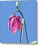 Fritillaria Meleagris - Leif Sohlman Metal Print