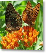 Fritillaries  Metal Print