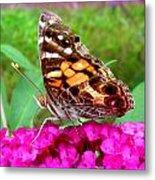 Fritillary Butterfly  Metal Print by Kim Galluzzo Wozniak