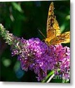 Fritillary Butterfly  Metal Print