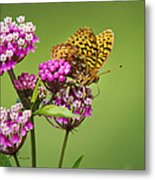 Fritillary Butterfly Square Format Metal Print