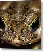 Frog 2 Metal Print by Optical Playground By MP Ray