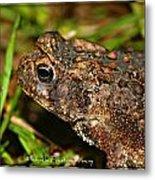Frog 2 Metal Print