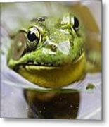 Frog And Fly Metal Print