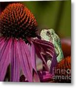 Frog And His Cone Metal Print