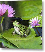 Frog And Water Lilies Metal Print