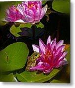 Frog And Water Lily Metal Print