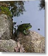 Frog At Edge Of Pond Metal Print