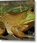 Frog At Night Metal Print