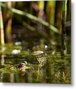 Frog Eyes Metal Print