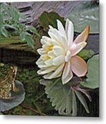 Frog In Awe Of White Water Lily Metal Print