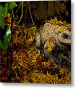 Frog In The Fall Metal Print