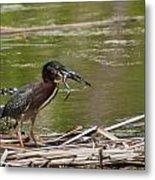 Frog Legs And Green Heron Metal Print