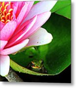 Beautiful Life Metal Print