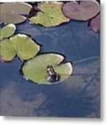 Frog On A Lilypad Metal Print