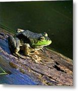 Frog On A Log Metal Print
