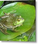 Frog On Lily Pad Photo Metal Print