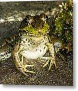Frog Pose Metal Print
