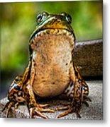 Frog Prince Or So He Thinks Metal Print