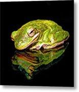 Frog Metal Print