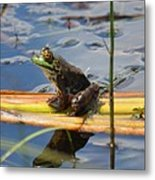 Froggy Reflections Metal Print