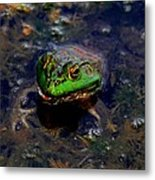 Froggy Smile Metal Print