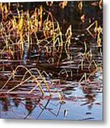 Froggy Sunset Metal Print