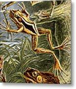Frogs Detail Metal Print