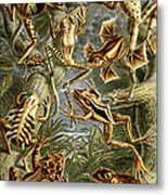 Frogs Frogs And More Frogs Metal Print
