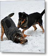 Frolicking In The Snow Metal Print